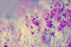 Purple wild flowers. Beautiful purple wild flowers close up Stock Photography