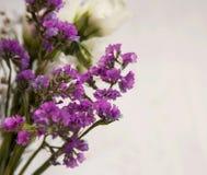 Purple wild flowers Royalty Free Stock Photography