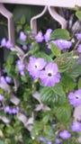 Purple wild flowers Stock Images
