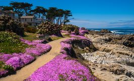 California purple Royalty Free Stock Photography