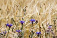 Purple wild flowers Stock Photography