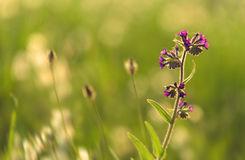 Purple wildflower in the garden Stock Photo