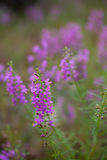 Purple Wildflowers. Growing in a Field stock images