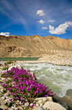 Purple Wildflowers at Bulukul Lake, Tajikistan Stock Photo