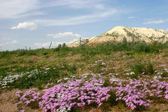 Purple Wildflowers And Butte Royalty Free Stock Images