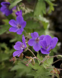 Purple Wildflowers Stock Photo