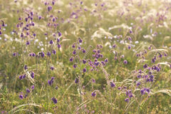 Purple wildflowers and grass mat Royalty Free Stock Photos