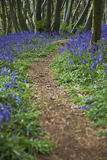 Purple Wildflowers on Path Stock Images