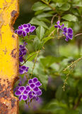 Purple wildflowers and rusty yellow fence bar Stock Photos
