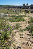 Purple wildflowers survive among the ruins Royalty Free Stock Photo