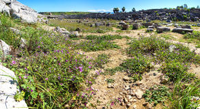 Purple wildflowers survive among the ruins Royalty Free Stock Photography
