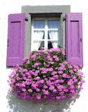 Purple window with a flowers.