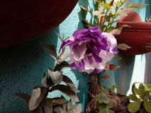 Purple wish Stock Photography