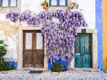 Purple wisteria plant growing arounf doors of an old house in Po royalty free stock image