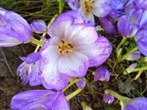 Purple wonders Stock Images
