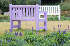Purple wooden bench Stock Image