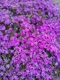 Purple world. World of purple Stock Photos
