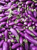 Purple world of eggplants Stock Photos