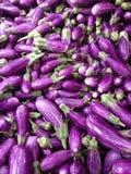 Purple world of eggplants Stock Photos