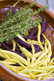 Purple and yellow beans in a dish Stock Images