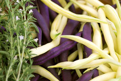 Purple and yellow beans with savory close-up Stock Image