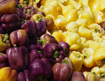 Purple and Yellow Bell Peppers Royalty Free Stock Photo