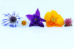 Purple, yellow and blue spring flowers Royalty Free Stock Images