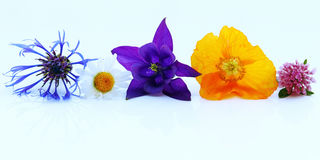Purple, yellow and blue spring flowers Royalty Free Stock Photography