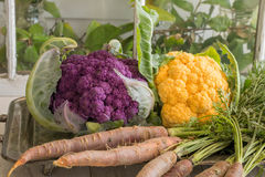 Purple and Yellow cauliflower with raw carrots on a vintage silver platter stock photography