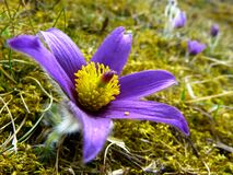 Purple and Yellow Flower Stock Images