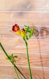 Purple with yellow freesia flower, wood background, green plant Royalty Free Stock Photos
