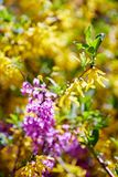 Purple and yellow liliac flowers stock photo