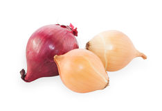 Purple and yellow onions Royalty Free Stock Image