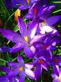 Purple Yellow Petaled Flowers Stock Photo