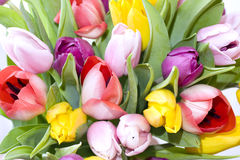 Purple, yellow and pink tulips Royalty Free Stock Photo