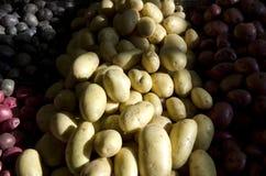 Purple yellow red potatoes Stock Image