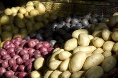 Purple yellow red potatoes Royalty Free Stock Image