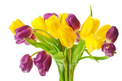 Purple and Yellow Spring Tulips Isolated Royalty Free Stock Photos