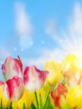 Purple and yellow tulips against the sky. EPS 10 Stock Image