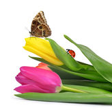 Purple and yellow tulips. With butterfly and ladybug Stock Photography
