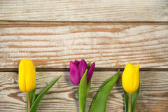 Purple and yellow tulips on white rustic wooden background. Stock Photo