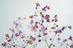 Purple and yellow wildflowers Stock Images