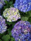 Purple and yellowish flowers. Purple and greenish yellow flowers background stock photo