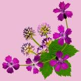 PurpleBlossomsCornerPink Stock Foto