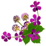 PurpleBlossomsCornerWhite Royalty-vrije Stock Afbeeldingen