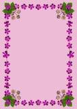 PurpleBlossomsFrameDinPink1 Stock Foto's