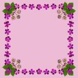 PurpleBlossomsFrameSquarePink1 Royalty-vrije Stock Afbeeldingen