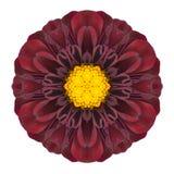 PurpleDahlia Mandala Flower Kaleidoscopic Isolated auf Weiß Lizenzfreie Stockbilder