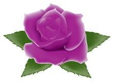 purplen steg Royaltyfri Fotografi
