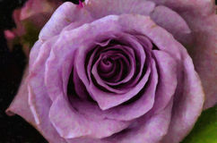 purplen steg Royaltyfri Foto
